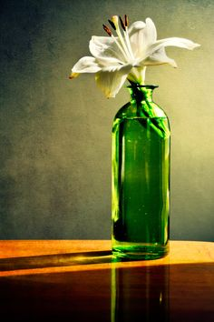 Caught By The Morning Light by Anna Wacker on 500px .......Beautiful warm sunlight is shed on a green bottle with a white lily.