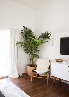Palm tree in the corner
