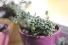 lovely sedum!