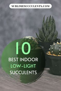 Check out our compilation for the best low-light succulents for indoor gardening. Here are your options for easy and low-maintenance plants that are perfect to keep indoors. Find your options on this pin! Succulent Gardening, Succulent Care, Indoor Gardening, Gardening Tips, Succulents In Containers, Cacti And Succulents, Planting Succulents, Caring For Succulents Indoor, Low Light Succulents