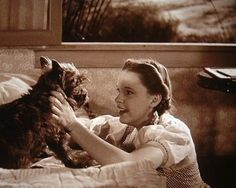 Seen this movie every 46 years of my life, and I still get upset when the witch threatens Toto