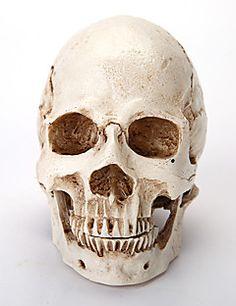 Artigos de Halloween Esqueleto/Caveira Trajes da Noite das Bruxas Branco Cor Única Mais Acessórios Dia Das Bruxas / Carnaval Unisexo