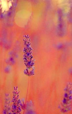 Lavanda by Jose Maria Ramos Montero on Rose Orange, Orange And Purple, Shades Of Purple, Orange Color, Orange Aesthetic, Aesthetic Art, Aesthetic Bedroom, Aqua Coral, Color Lila