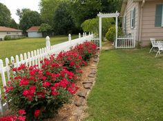 Knockout roses and hostas planted along fence | Landscape Ideas ...