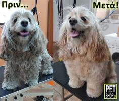 Pet Grooming, Pets, Animals, Animales, Animaux, Animal, Animais, Animals And Pets