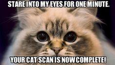 Cat memes FTW