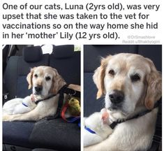 animalstofallfor animals Dog Cat cataesthetic is part of Cute animals - Funny Animal Memes, Cute Funny Animals, Cute Baby Animals, Funny Cute, Animals And Pets, Cute Cats, Funny Dogs, Hilarious, Animals Beautiful