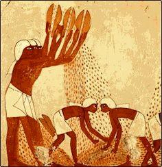 As mulheres atiravam o grão [de trigo] ao ar para separar as cascas. O grão era armazenado e o ciclo da agricultura começava.  http://egitorevelado.blogspot.pt/2011/09/agricultura.html?m=1