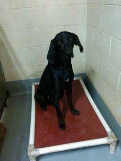 JACK...VERY SWEET! Pet ID: 2665 • Shots Current • Hound Mix • Adult • Male • Medium. Humane Society of Raleigh County Inc. Beckley, WV 25802 http://www.petfinder.com/petdetail/28394273/ Petfinder.com