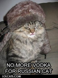 No more vodka for Russian cat