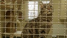 Eine Katze aus dem Tierschutz adoptieren