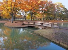 Yoyogi Park. Best place to view the beautiful autumn foliage in Tokyo, Japan.