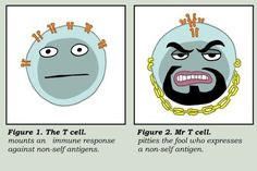 T cell vs. Mr. T cell