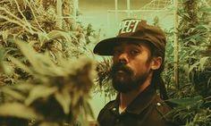 Damian Marley at a Denver marijuana facility.