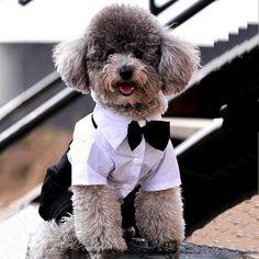 New Mascotas Western Style Men's Suit Bow Tie Small Pet Dog Clothes Puppy Apparel Jumpsuit Cachorro #Affiliate