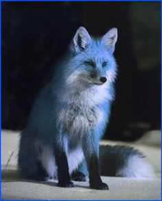 They do not have any extra lives, but when a fox becomes a leader, they are given the four elements, and they get to keep their recent powers. Description from warriorcatsrpg.com. I searched for this on bing.com/images