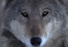 Wolf Eyes - Oil on Canvas by Vincent Kennard