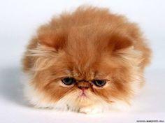 ^Mr. Grumpy