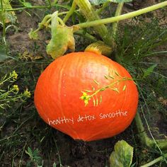 ....and I need to grow a little pumpkin cb lb #organic #organicfood #ironman #instagood #nutrition #fresh #family #healthy #healthylifestyle #photo #photography #homemade #eatclean #cleaneating #vitamins #body #fitness #motivation #organicfarming #beautiful #live #life #landscape #pumpkin  detox glten free healthy cleaneating