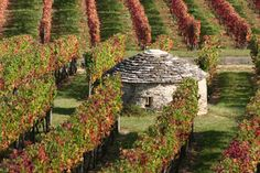 Cote de Nuits Burgundy, wine route from Dijon to Beaune