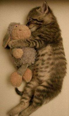 Sizin minik dostunuzun da sarılıp uyuduğu bir oyuncağı var mı?
