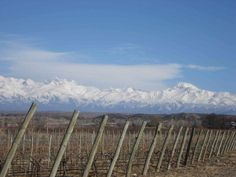 Bodega #Gouguenheim #Winery (Tupungato, #Mendoza)