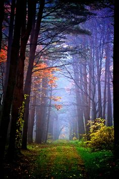 Mysterious forest, Hachimantai in Iwate, Japan