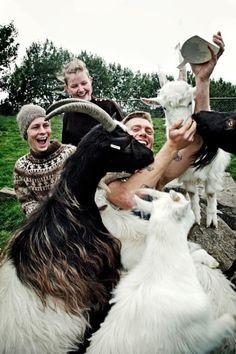 Múm & Some Goats