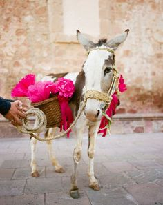 Pet donkey ring bearer!
