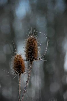 kaardenbol-bloemen fotografie-beauty of nature door BIRKENknits