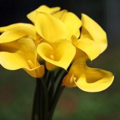 Flores da Primavera – Fotos de lindas flores, Rosas, Ipê Amarelo