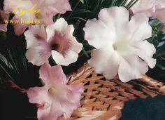 Cold Porcelain Tutorials: Cold Porcelain Petunia
