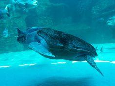 Turtle, Two Oceans Aquarium, Cape Town, South Africa Ocean Aquarium, Cape Town, Oceans, South Africa, Whale, Turtle, Photography, Animals, Whales