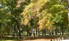 Ashland kentucky | File:Central Park trees Ashland KY Oct 2006.JPG - Wikipedia, the free ...