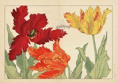 Tanigami Konan Seiyo Soka Zofu Woodblock Print from 1917. #japanese #woodblock #flowers