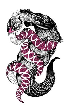 Iain Macarthur..This would make a good symbol for the Florida Everglades, where introduced Anacondas are challenging native Alligators for the top of the food chain.