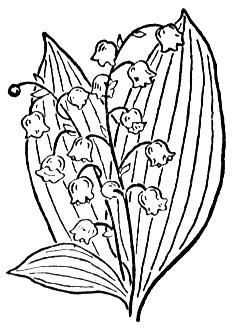 Click to see printable version of Lily Of The Valley 2 coloring page