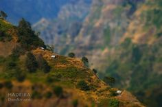 Meia Legua, Ribeira Brava  (tags: #madeira #photography #travel #madex #donamaro)