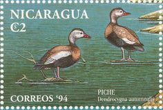 Black-bellied Whistling Duck stamps - mainly images - gallery format