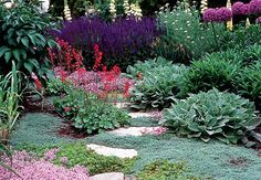 Strategies to create a psychologically soothing landscape with a variety of flowers. Creeping thyme's pink flowers take on a cooler hue when paired with the purple salvia and allium. Red would normally lend a hot look, but the heuchera's modest cluster of blooms doesn't change the overall effect.