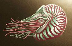 Nautilus by Anji Aiko