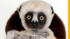 American wildlife photographer, Joel Sartore, is fighting to save endangered species by making us fall in love with them.