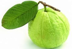 ฝรั่ง : Common guava -