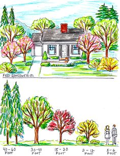 SOME IDEAS ABOUT PLANTING TREES BY YOUR HOUSE FOR CURB APPEAL; When getting ready to purchase a tree(s) to plant on your front lawn, or other parts of your property, the tree's height, when mature should be taken into consideration. The right sized tree can set off your house and landscape, while the wrong one can dwarf your house and even you