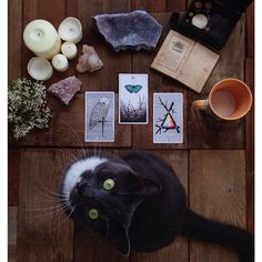 the mother of swords, the six of wands, the 3 of wands and a green eyed kitty