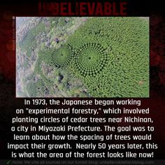 Wierd Facts, Unusual Facts, Interesting Facts About World, Wtf Fun Facts, Funny Facts, Do I Have Adhd, Japan Facts, Psychology Fun Facts, Unbelievable Facts