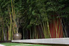 Courtyard Bamboo
