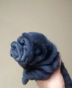 My baby!  it's my hippo apes. Looks just like little Nikka when she was a baby. Got to get another Shar pei soon!