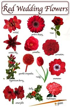 Red winter flowers by Given2