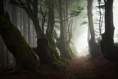 "Elder Souls by ~FlorentCourty on deviantART The 400 years old beech trees called ""l'Allée des Géants"", caught in a thick fog after a rainy night. Allier, France."